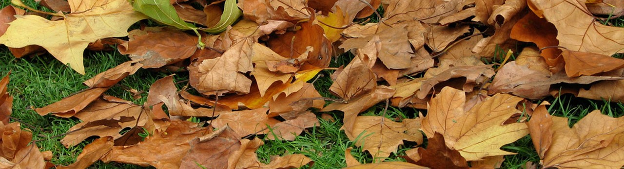 leaves collected and removed